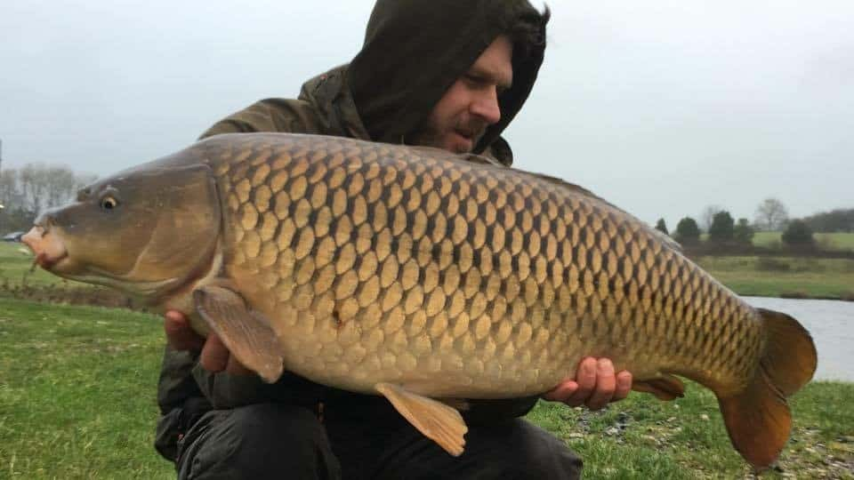 26lb Common for Ian